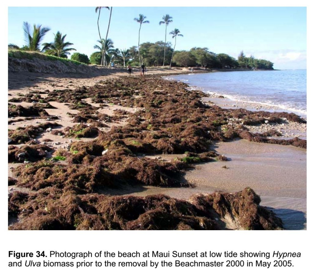 Algae on Beach in North Kihei